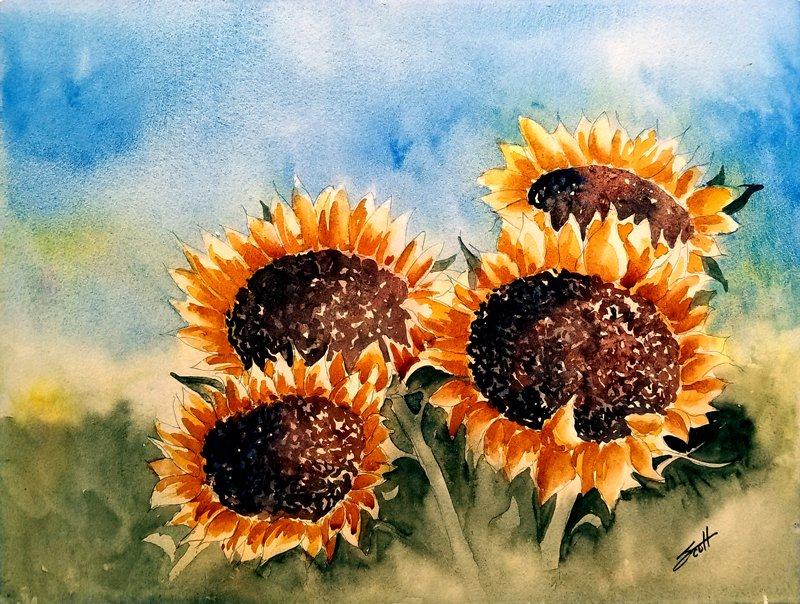 Sunflowers - Watercolor on Paper